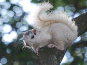 White Squirrel by Dobbinsphotography