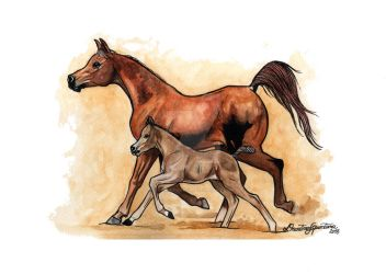 Arabian Mare and Foal by HorsEquinoS