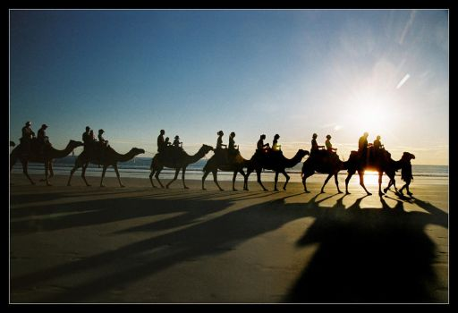 Camel silhouettes and shadows by wildplaces