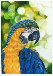 Blue-and-yellow macaw by JuliaOmelchenko