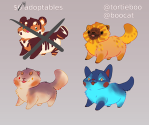 $4 adopts! 3/4 open! [PRICE REDUCED] by tortieboo