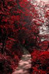 Into the Bloodred Forest by Aenea-Jones