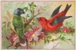 Rainbow Bunting and Scarlet Tanager by Yesterdays-Paper