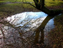 Puddle by smevstock