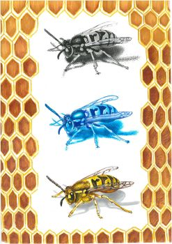 Sketch of wasps by Isunah