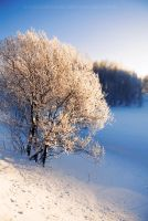 Snow tree by konstantingl