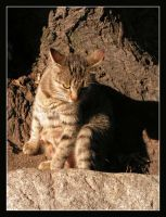 166 by evy-and-cats