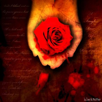 Single Rose Left To Remember by winch3s7er