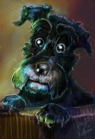 Commission Champ the Schnauzer by Mad--Munchkin