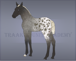 Foal Design #2.03 by CookieLoveXO