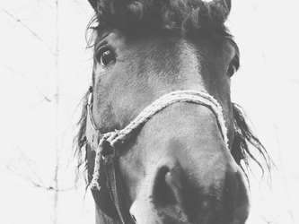 Horse by SweetNatalii