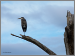 Heron up high by Mogrianne