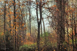 In the forest after the rain by Pajunen