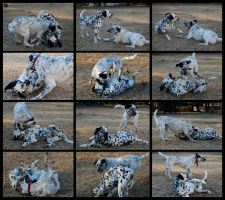 Dog Play by MauserGirl