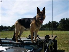 Jeep Dog by MauserGirl