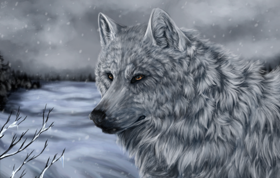 White Wolf of Icicle Creek + video by Virren