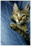 Cat and Jeans by JacquiJax
