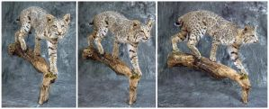 Out on a Limb by WeirdCityTaxidermy