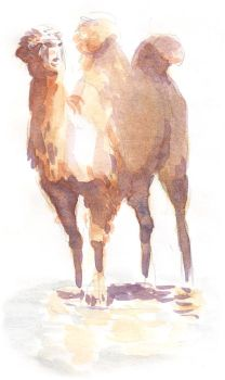 camel-watercolor by davidsdoodles