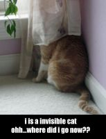 lol cats invisible cat by chibiviolinist