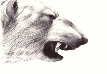 Polar Bear by Alithographica