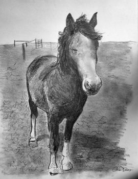 Portrait of Murphy the horse by filmshirley
