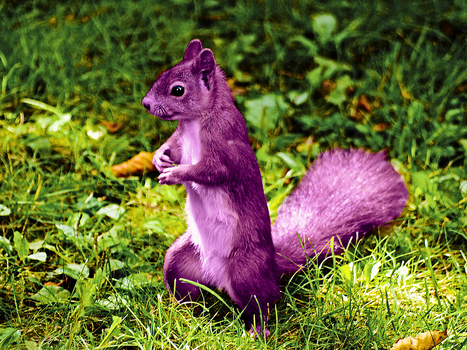A Purple Squirrel for Ferret Luver Girl :) by Oj4breakfast