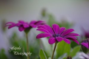 flowers by FayolaPhotography