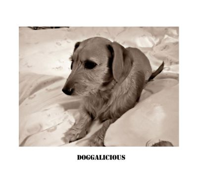 doggalicious by JohnKeats