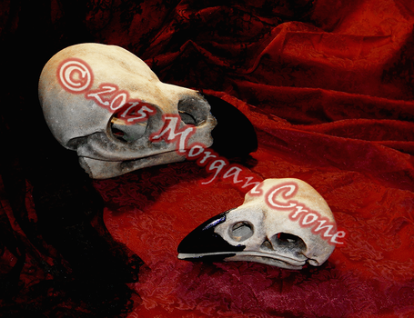 Giant Crow Skull Sculptures Side-by-Side Size by MorganCrone
