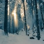 winter light by Floriandra
