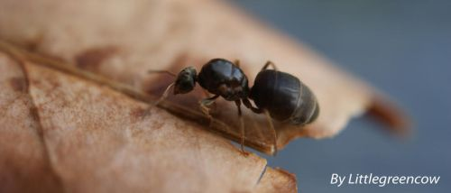 ant of automn by littlegreencow
