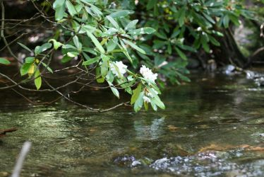 A Flower Over A River by kingwingdesign