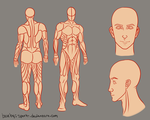 Adult Male body reference sheet 2.0 by Spork-
