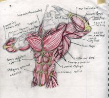 Anatomy study on The Tick by Anammic