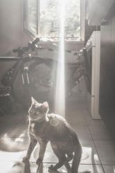 Spotlight Cat by Sabz0r