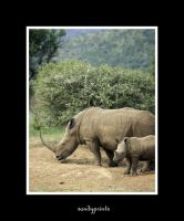 mum and baby rhino by sandyprints