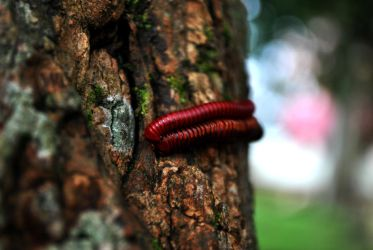 nature_centipede by shadow-danielz