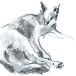 Cat sketch by Arkanth
