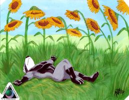 Didy in a field of sunflowers by LoopyWolf