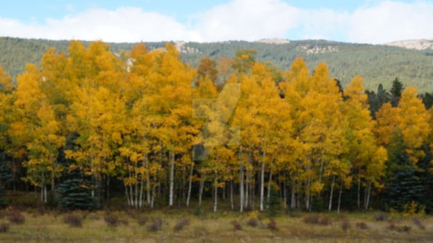 Colorado Autumn by Lady-J-Photography