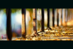 Colors of Fall by Snhussain