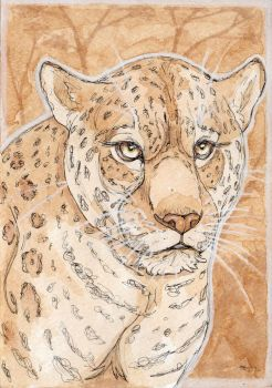 Traditional Media: Jaguar Tea Study by The-Hare
