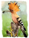 Hoopoe sitting on a tree stump watercolor painting by Kajenna