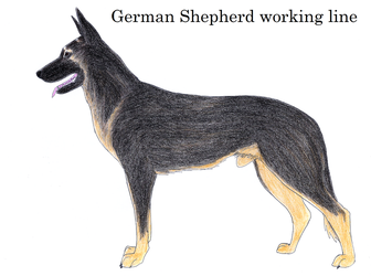 GSD working line 1930's by Shanglon