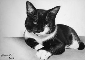 My cat, Pocak [Graphite][A3] by TarcDnB