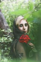 They call me the Wild rose III by HammettLady