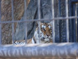 Folsom City Zoo Photo Series 4 by lilly-peacecraft