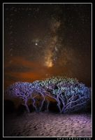 Milky Way Over Polihale by aFeinPhoto-com