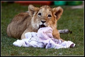 Akimba and the towel by AF--Photography